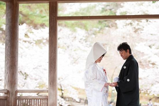 桜ロケ in 奈良